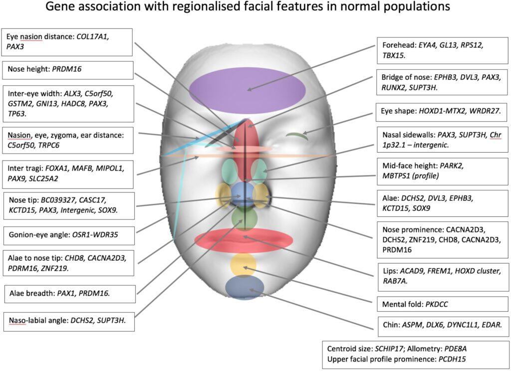 Image source- Facial Genetics: A Brief Overview (journal frontiers in genetics)